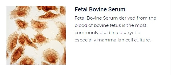 PurMa Tissue Culture Reagents Fetal Bovine Serum