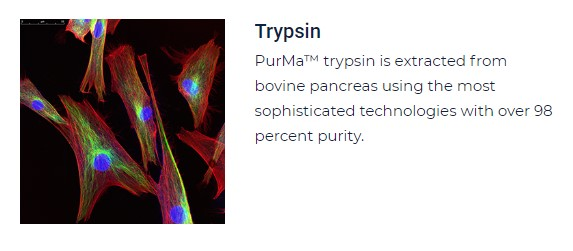 PurMa Tissue Culture Reagents Trypsin